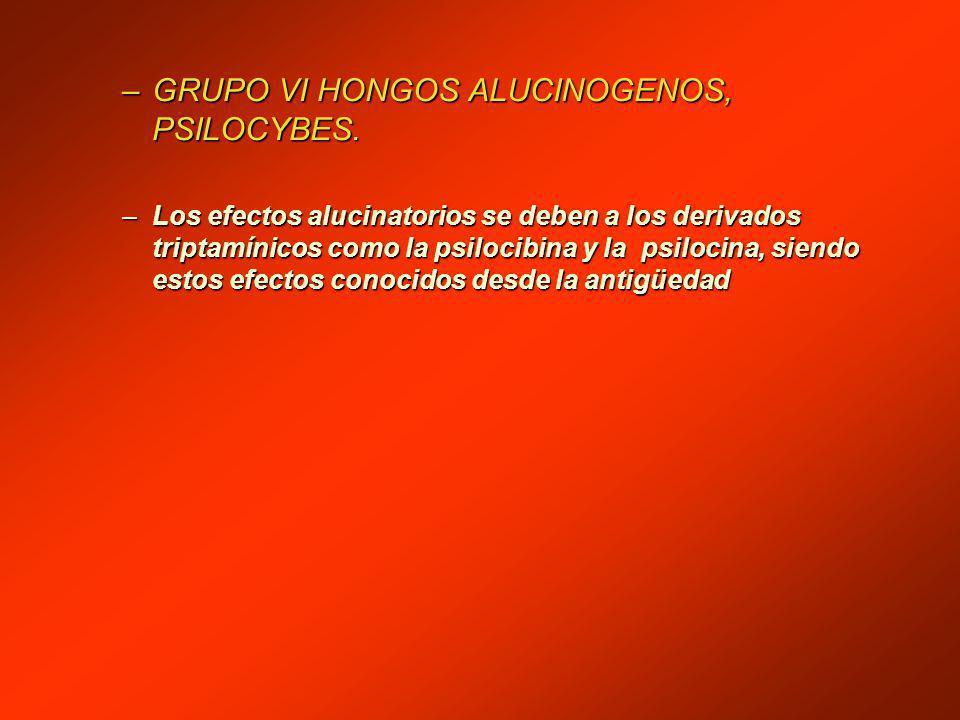 –GRUPO VI HONGOS ALUCINOGENOS, PSILOCYBES.