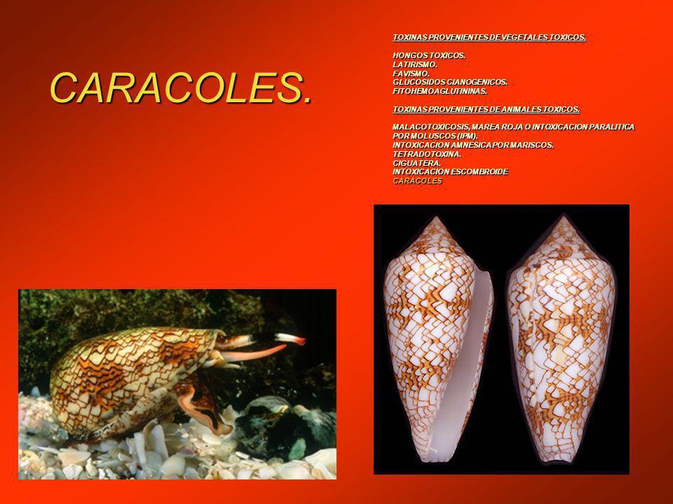CARACOLES.TOXINAS PROVENIENTES DE VEGETALES TOXICOS.
