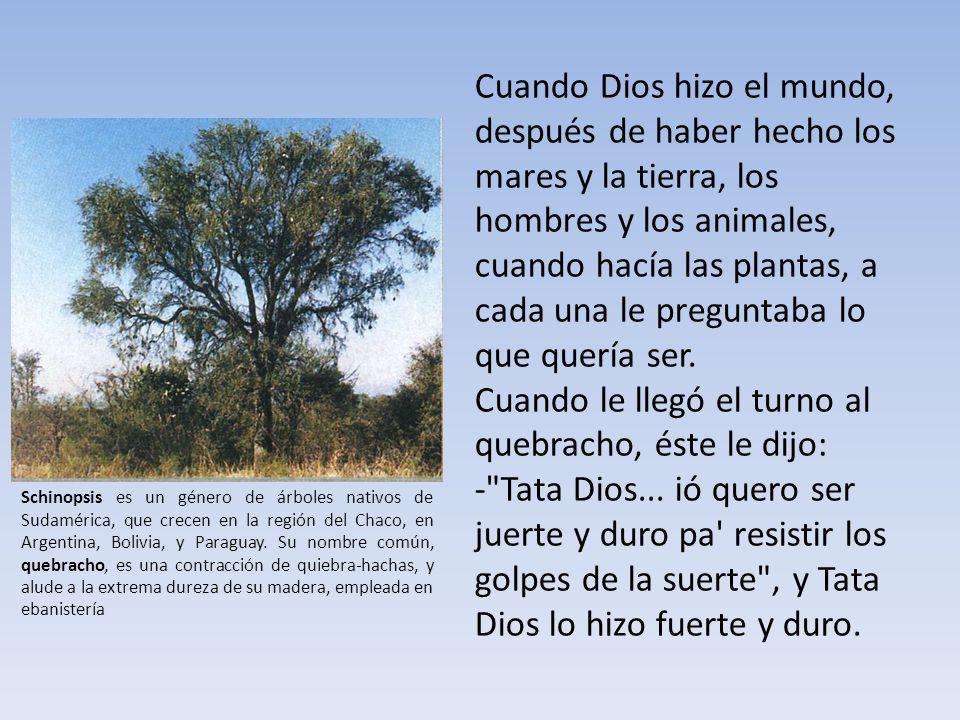 Árbol de la bella sombra, ombú en guaraní, que significa bulto oscuro porque en la gran planicie sobresale como una señal, como un hito.