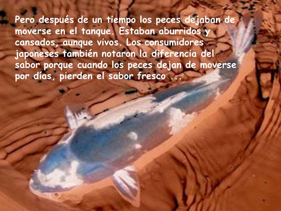 Las compañías instalaron entonces en los barcos tanques para los peces. Podían así pescar los peces, meterlos en los tanques y mantenerlos vivos hasta