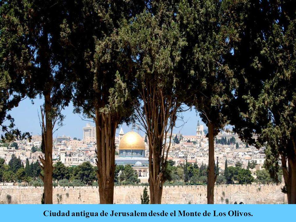 El monte de los Olivos está ubicado en el valle de Kidrón, al este de Jerusalem.