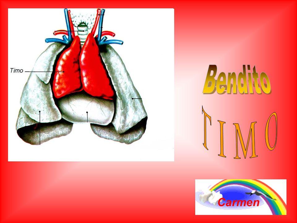 El ejercicio estará atrayendo la sangre y la energía para el timo, haciéndolo crecer en vitalidad y beneficiando también los pulmones, corazón, bronqu