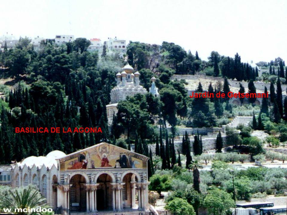 Jardín de Getsemaní El Jardín de Getsemaní se encuentra ubicado en la base del Monte los Olivos.