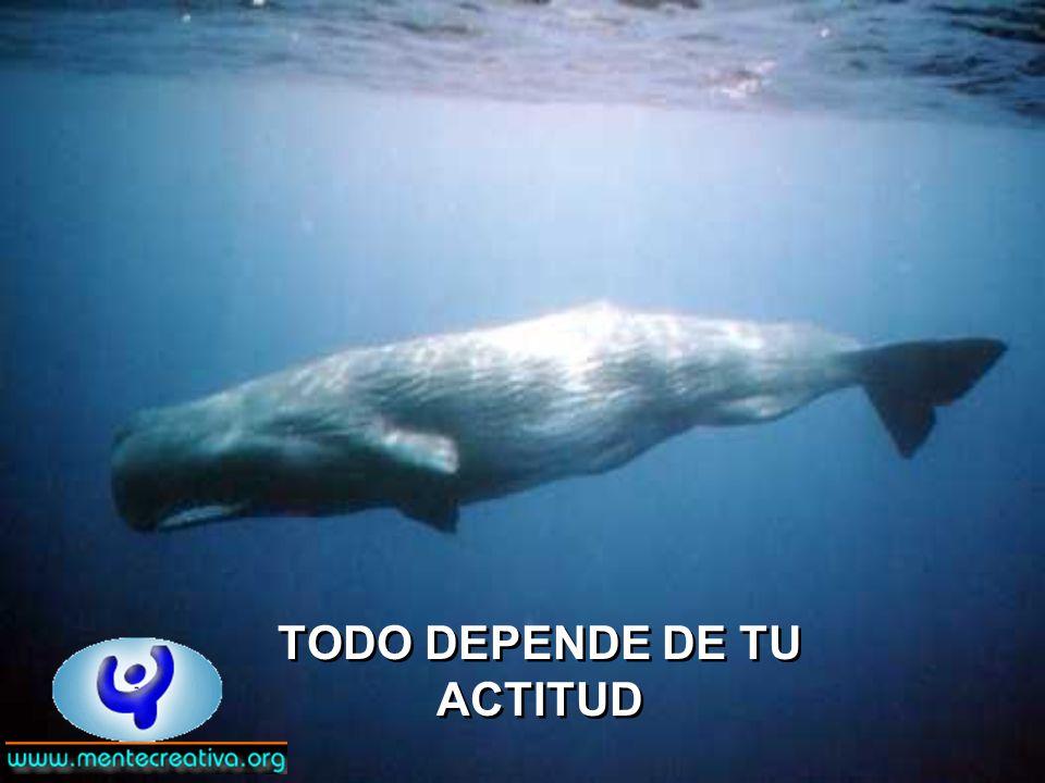 TODO DEPENDE DE TU ACTITUD TODO DEPENDE DE TU ACTITUD