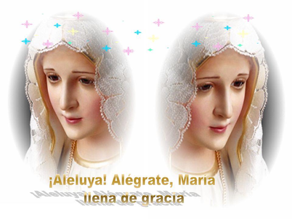 Sin pecado, sin mácula, ni herida en gracia del Altísimo engendrada desde el seno de tu madre consagrada fuiste, en la luz, divina concebida.