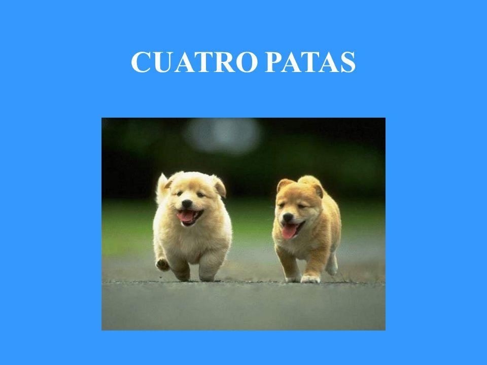 CUATRO PATAS