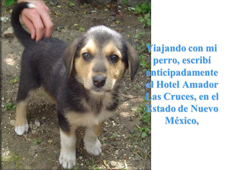 Viajando con mi perro, escribí anticipadamente al Hotel Amador Las Cruces, en el Estado de Nuevo México, Viajando con mi perro, escribí anticipadamente al Hotel Amador Las Cruces, en el Estado de Nuevo México,