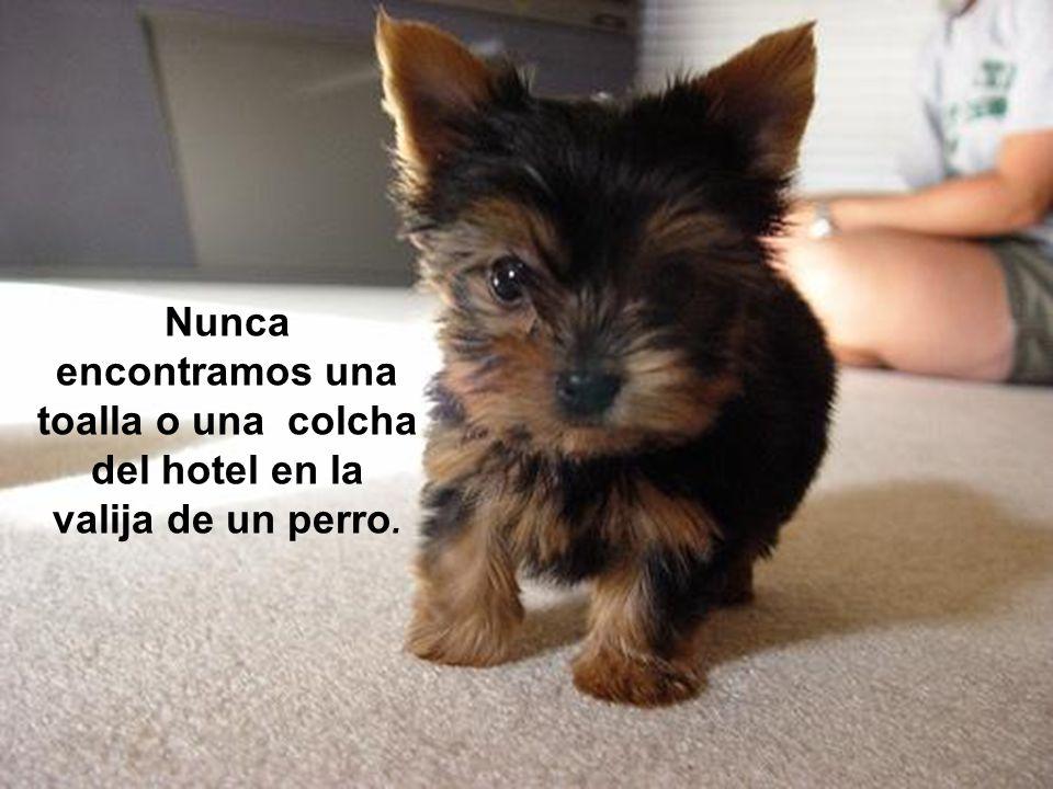 Nunca encontramos una toalla o una colcha del hotel en la valija de un perro.