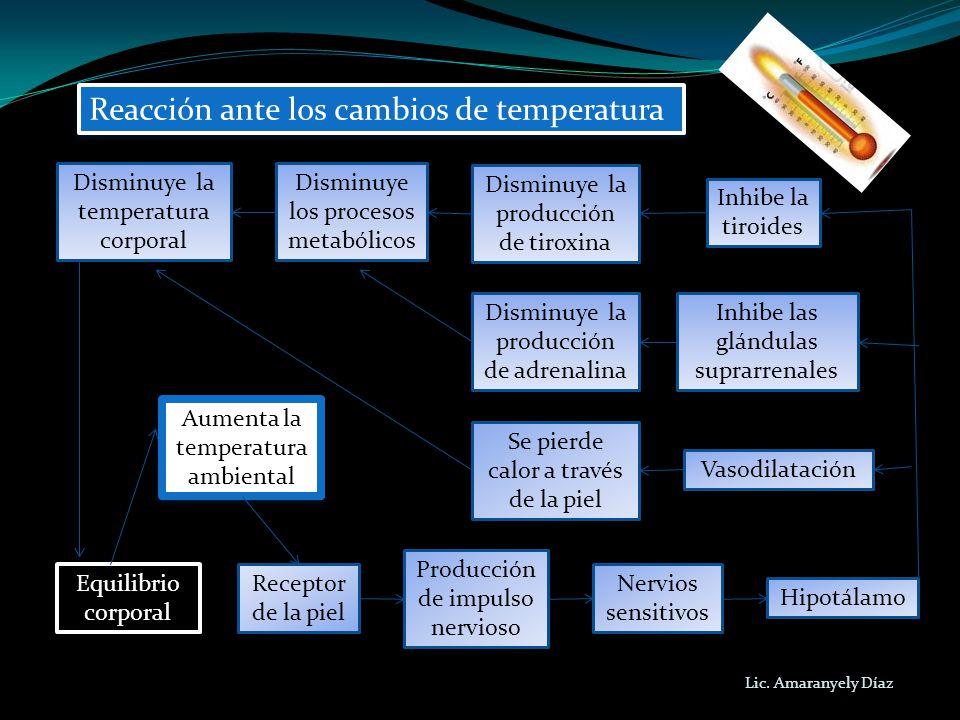 Lic. Amaranyely Díaz Reacción ante los cambios de temperatura Equilibrio corporal Equilibrio corporal Receptor de la piel Producción de impulso nervio