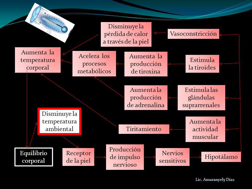 Equilibrio corporal Equilibrio corporal Receptor de la piel Producción de impulso nervioso Nervios sensitivos Estimula la tiroides Aumenta la producci