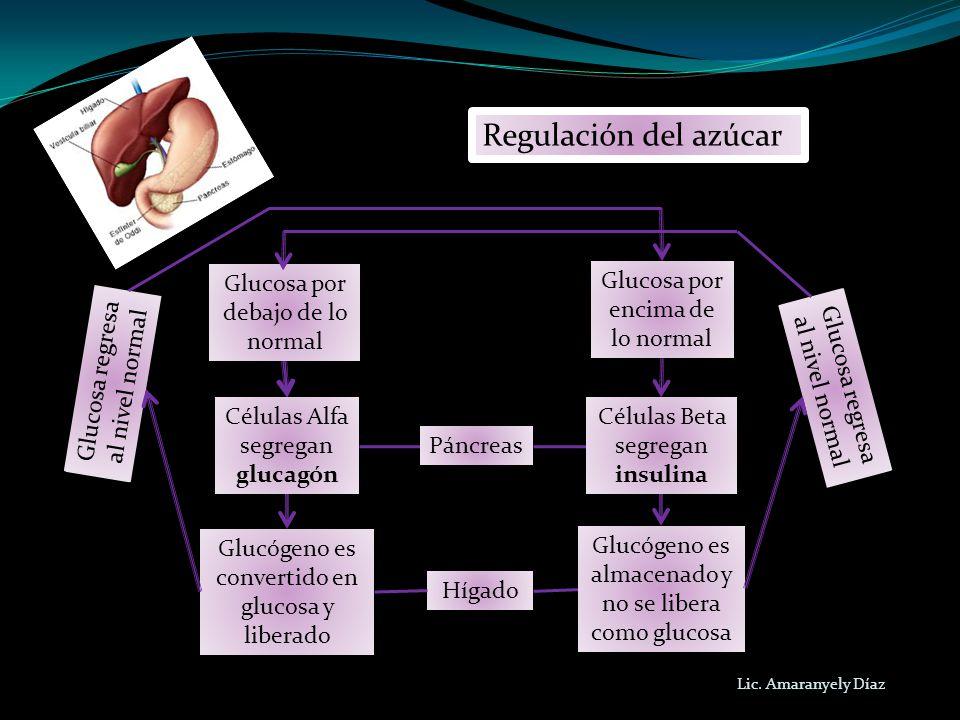 Lic. Amaranyely Díaz Regulación del azúcar Glucosa regresa al nivel normal Glucosa por debajo de lo normal Glucosa por encima de lo normal Glucosa reg