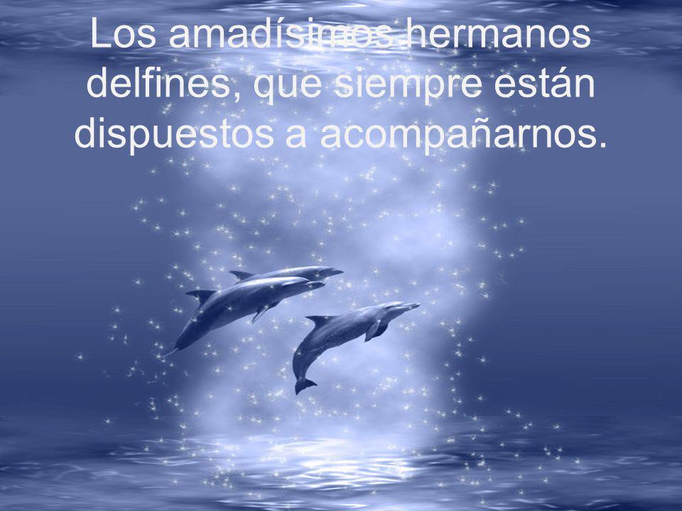 Los amadísimos hermanos delfines, que siempre están dispuestos a acompañarnos.