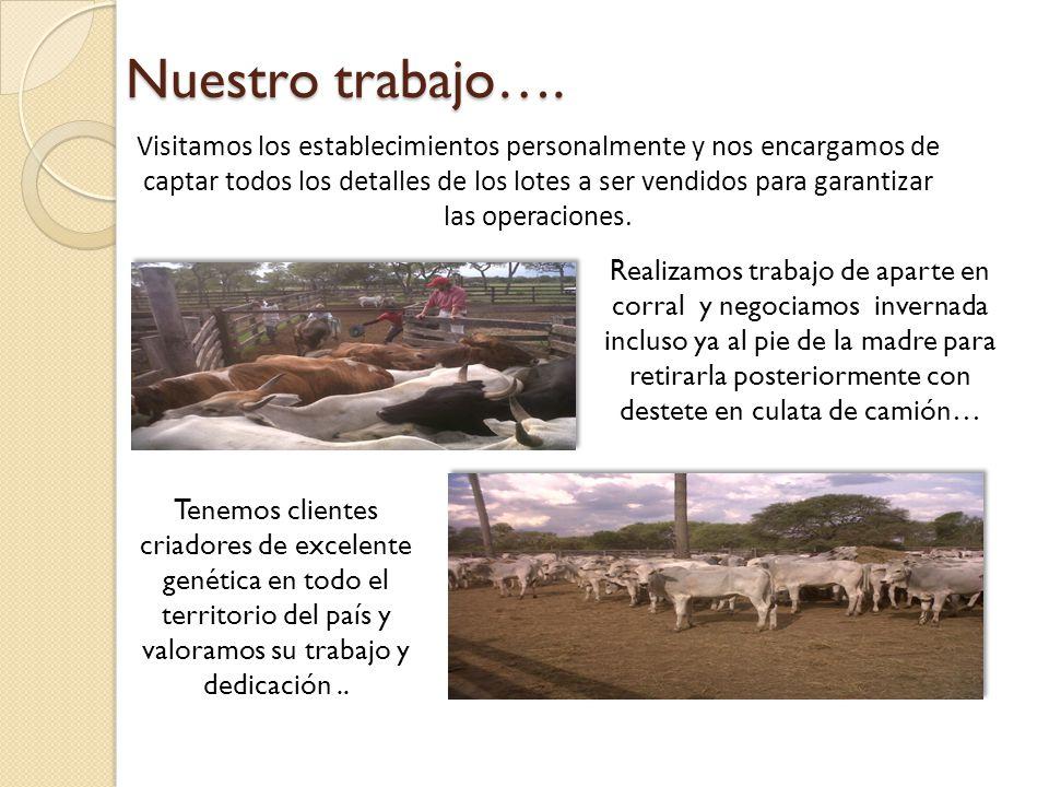 Genética de cabañas… Tenemos a la venta toros a campo y vientres de reconocidas cabañas del País además de un stock permanente de semen nacionales e internacionales de las razas más adaptadas a nuestro medio….