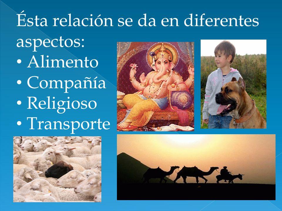 Ésta relación se da en diferentes aspectos: Alimento Compañía Religioso Transporte