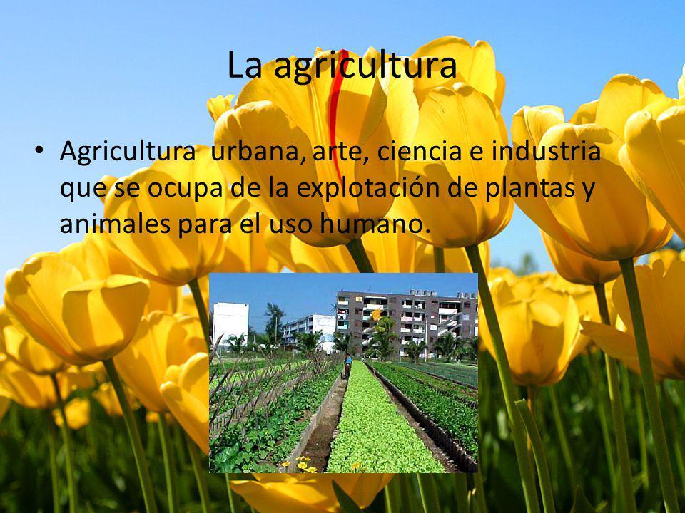 La agricultura Agricultura urbana, arte, ciencia e industria que se ocupa de la explotación de plantas y animales para el uso humano.