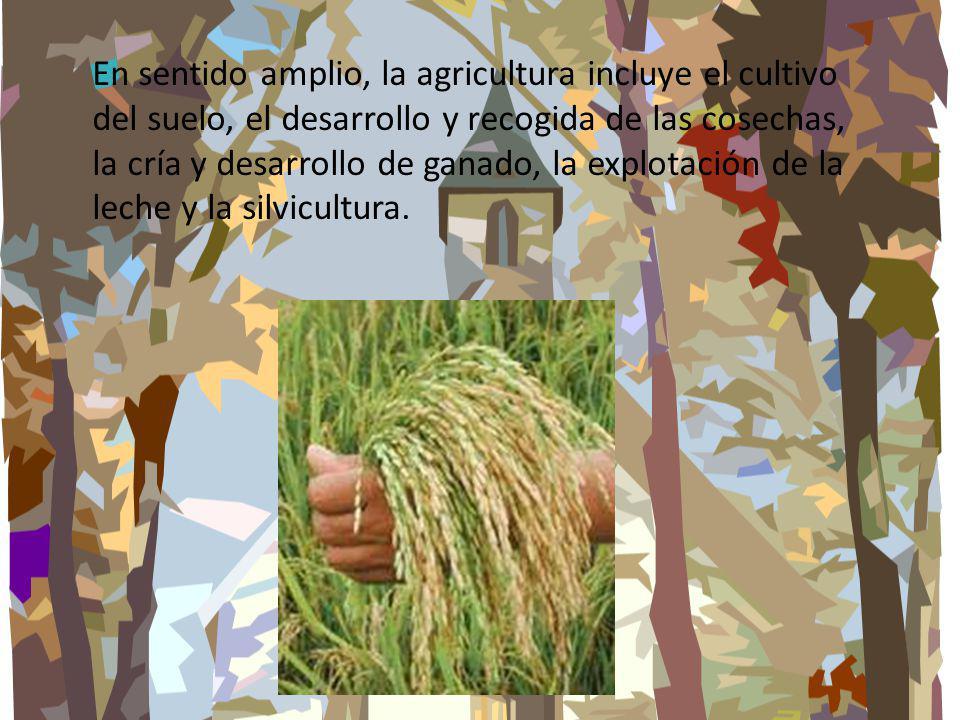En sentido amplio, la agricultura incluye el cultivo del suelo, el desarrollo y recogida de las cosechas, la cría y desarrollo de ganado, la explotaci