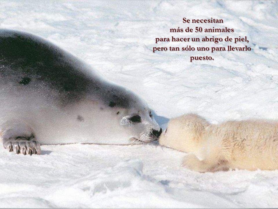 Verdaderamente, el hombre es el rey de los animales, pues su brutalidad supera a la de éstos. Leonardo Da Vinci Leonardo Da Vinci