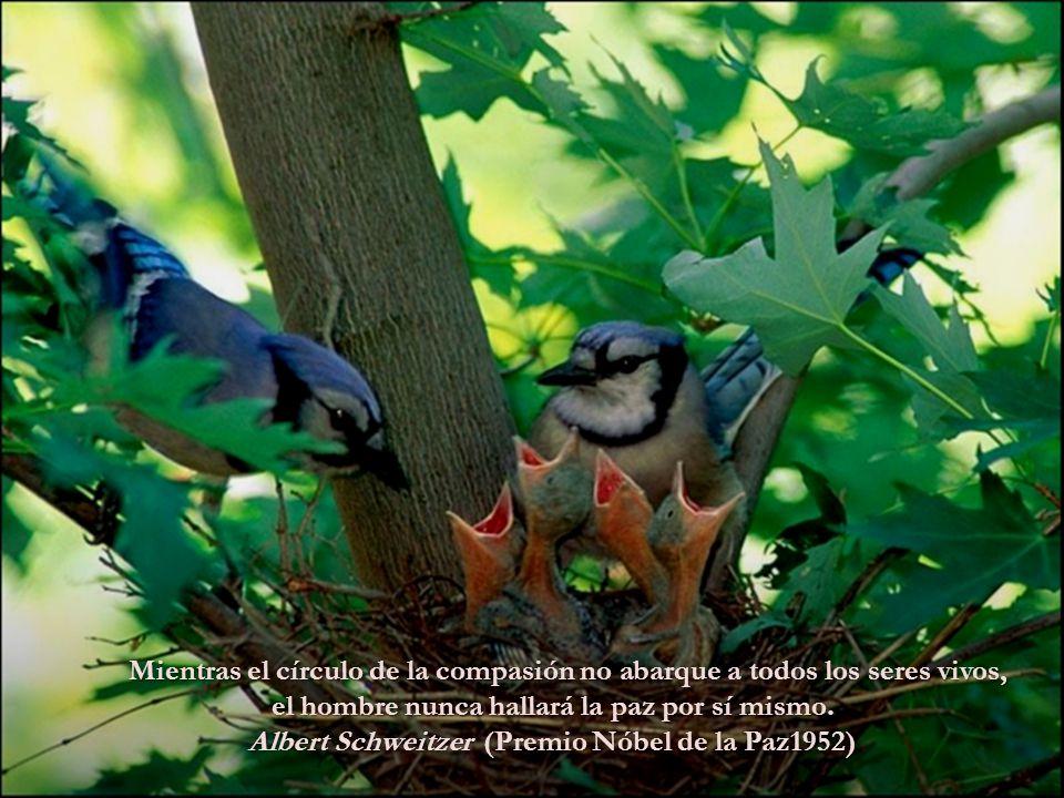 La lástima es siempre el mismo sentimiento, no importa la sientas por un animal, por un hombre o por una mosca. LeonTolstoy.