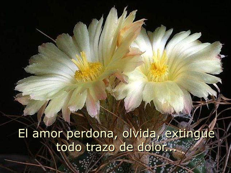 El amor no alimenta heridas con pensamientos dolorosos, no cultiva ofensas silenciando nuestra voz Anulando nuestra esencia El amor no alimenta herida