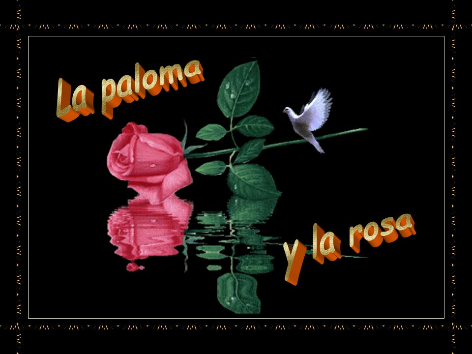 Había nacido rosa y no paloma y su función era perfumar los jardines y alegrar la vista a los hombres.