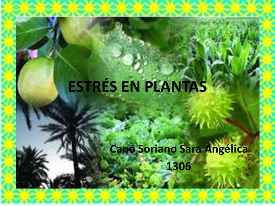 ESTRÉS EN PLANTAS Cano Soriano Sara Angélica 1306