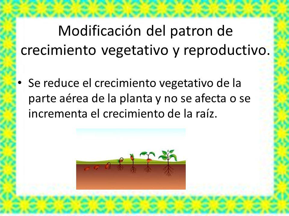Modificación del patron de crecimiento vegetativo y reproductivo. Se reduce el crecimiento vegetativo de la parte aérea de la planta y no se afecta o