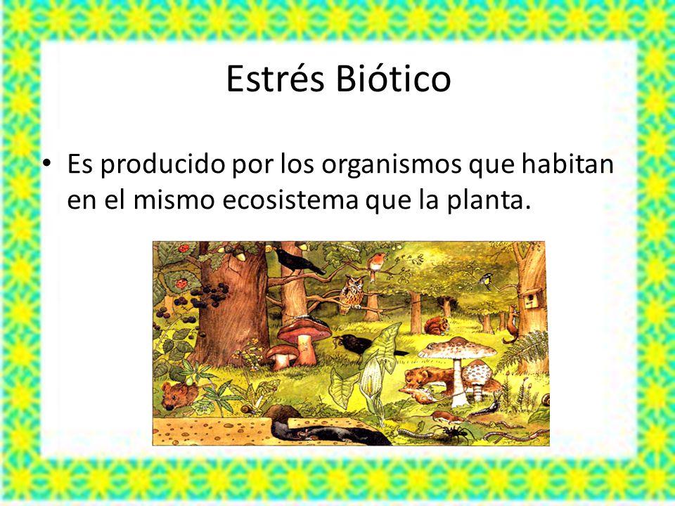 Estrés Biótico Es producido por los organismos que habitan en el mismo ecosistema que la planta.