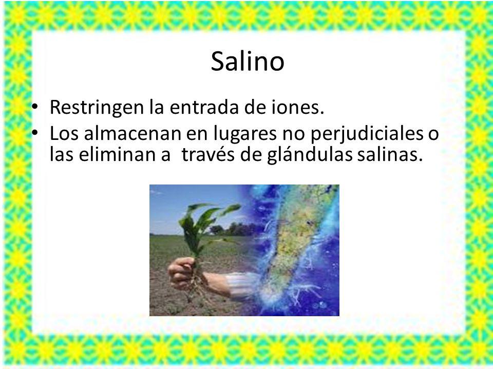 Salino Restringen la entrada de iones. Los almacenan en lugares no perjudiciales o las eliminan a través de glándulas salinas.