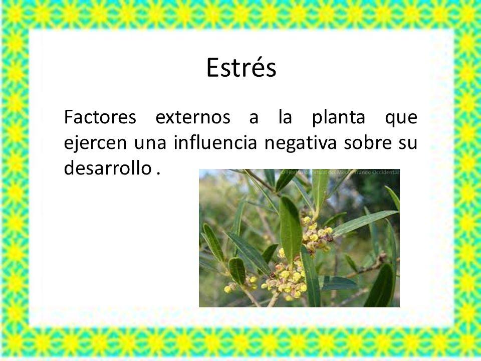 Estrés Factores externos a la planta que ejercen una influencia negativa sobre su desarrollo.