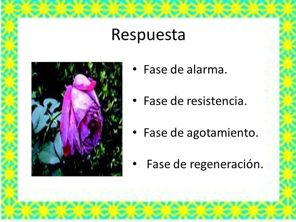 Respuesta Fase de alarma. Fase de resistencia. Fase de agotamiento. Fase de regeneración.