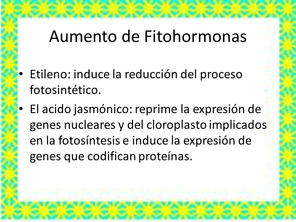 Aumento de Fitohormonas Etileno: induce la reducción del proceso fotosintético. El acido jasmónico: reprime la expresión de genes nucleares y del clor