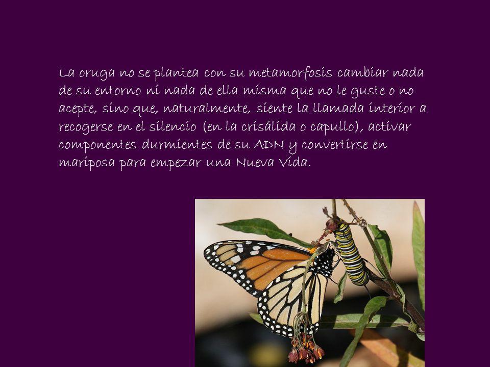 Lo que estás empezando a vivir no es un cambio, sino una Metamorfosis evolutiva que nace de tu interior y compartes en el momento presente con la Madre Tierra y con otras muchas dimensiones espirituales encarnadas en seres humanos.