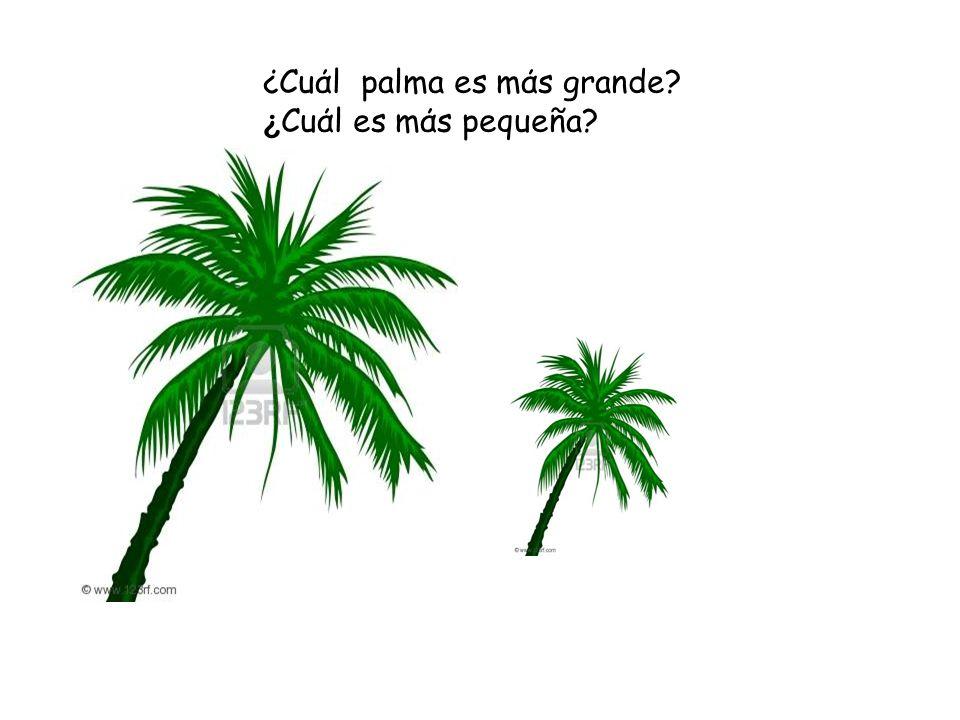 ¿Cuάl palma es mάs grande? ¿ Cuάl es mάs pequeña?