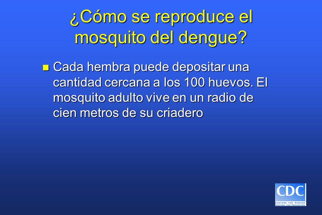 ¿Cómo se reproduce el mosquito del dengue.