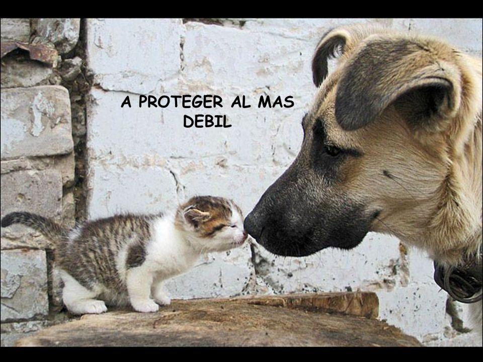 A PROTEGER AL MAS DEBIL