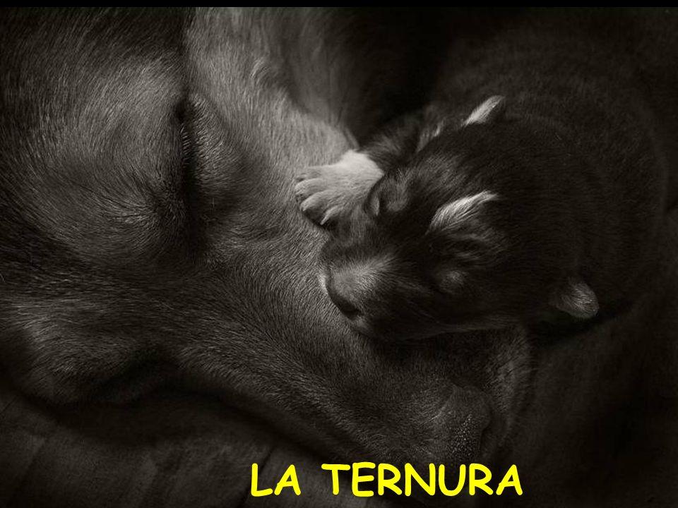 A TENER PACIENCIA CON LA CURIOSIDAD DE LOS MAS PEQUEÑOS