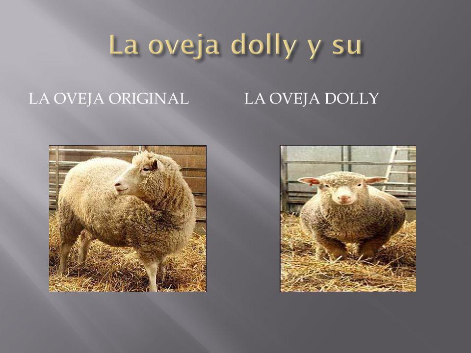 LA OVEJA ORIGINALLA OVEJA DOLLY