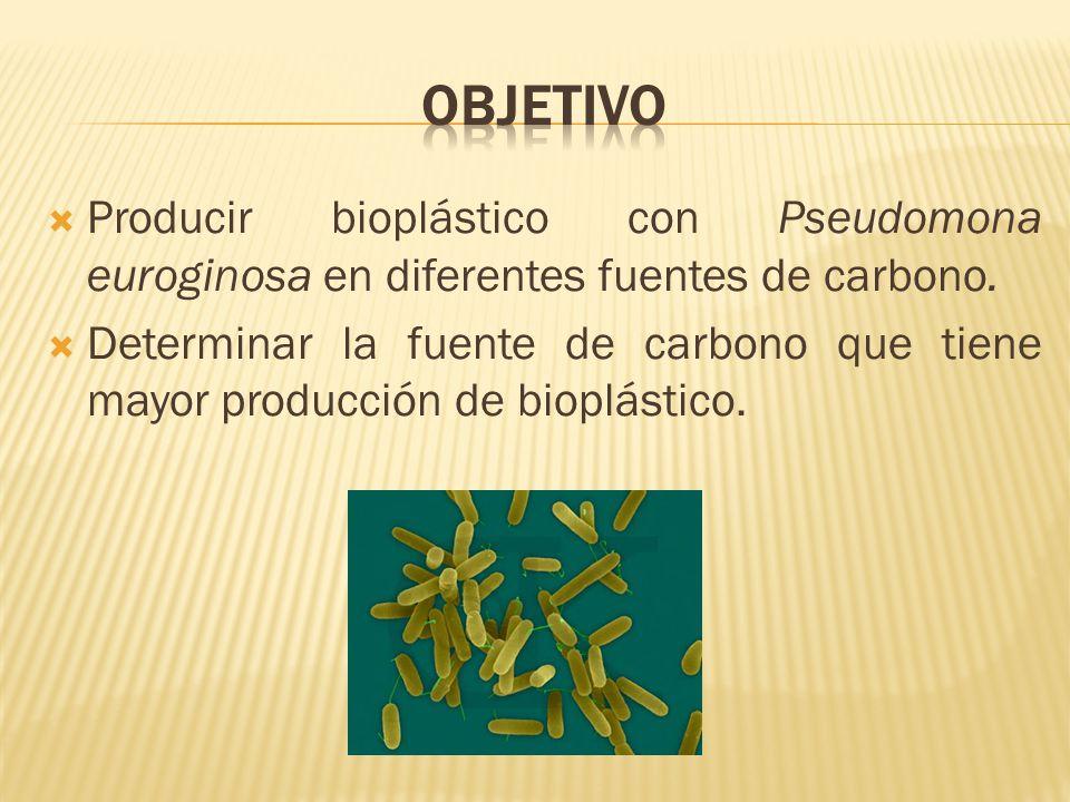 Producir bioplástico con Pseudomona euroginosa en diferentes fuentes de carbono. Determinar la fuente de carbono que tiene mayor producción de bioplás