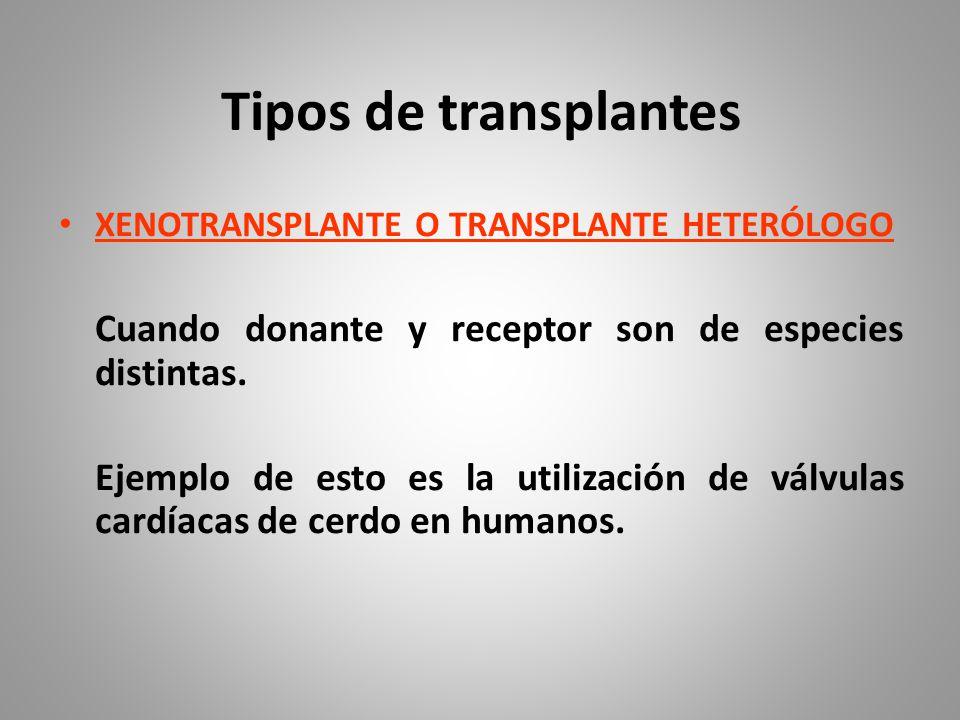 Tipos de transplantes XENOTRANSPLANTE O TRANSPLANTE HETERÓLOGO Cuando donante y receptor son de especies distintas.