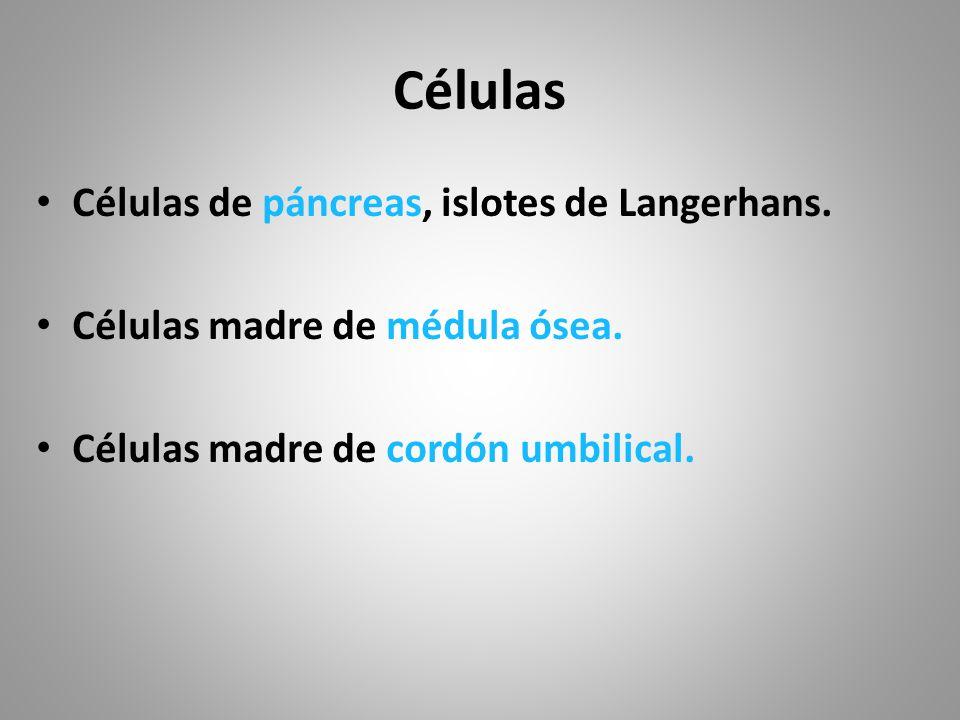 Células Células de páncreas, islotes de Langerhans.