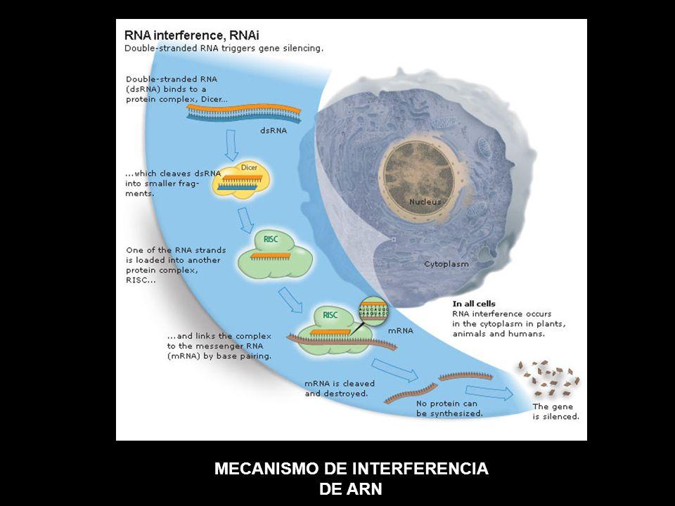 MECANISMO DE INTERFERENCIA DE ARN