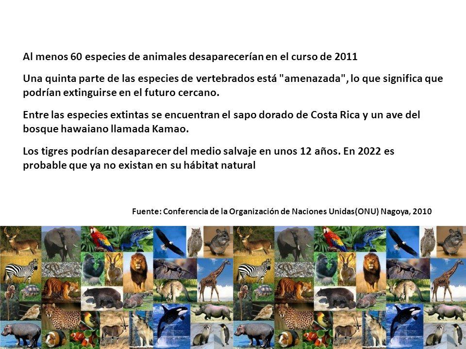 Al menos 60 especies de animales desaparecerían en el curso de 2011 Fuente: Conferencia de la Organización de Naciones Unidas(ONU) Nagoya, 2010 Una quinta parte de las especies de vertebrados está amenazada , lo que significa que podrían extinguirse en el futuro cercano.
