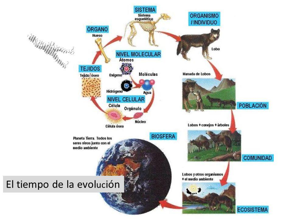 El tiempo de la evol uc ión