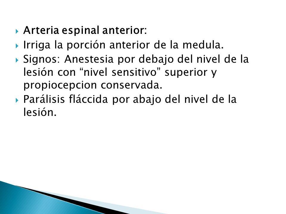 Arteria espinal anterior: Irriga la porción anterior de la medula. Signos: Anestesia por debajo del nivel de la lesión con nivel sensitivo superior y