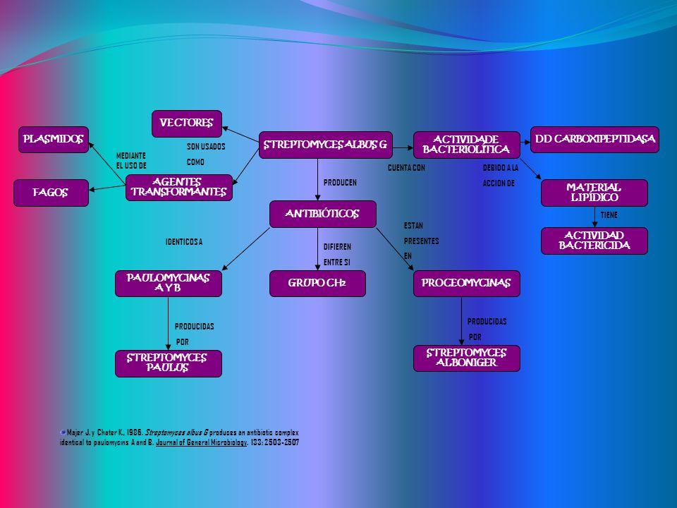 STREPTOMYCES ALBUS G ANTIBIÓTICOS PAULOMYCINAS A Y B GRUPO CH 2 STREPTOMYCES ALBONIGER STREPTOMYCES PAULUS PROCEOMYCINAS DD CARBOXIPEPTIDASA ACTIVIDAD