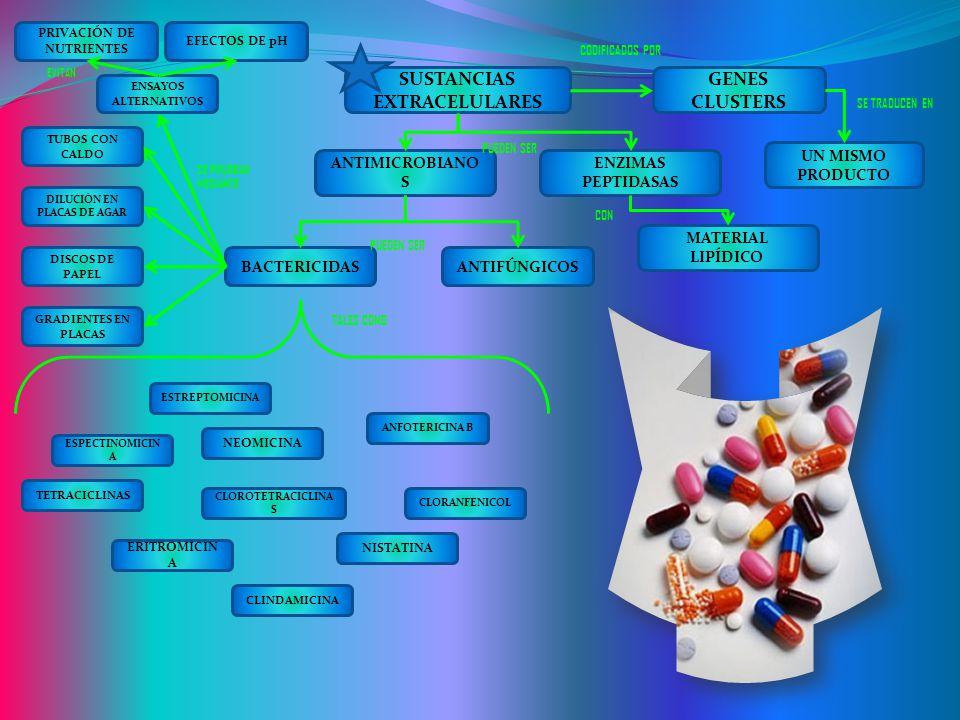 SUSTANCIAS EXTRACELULARES GENES CLUSTERS UN MISMO PRODUCTO ANTIMICROBIANO S ENZIMAS PEPTIDASAS MATERIAL LIPÍDICO ANTIFÚNGICOSBACTERICIDAS ESTREPTOMICI