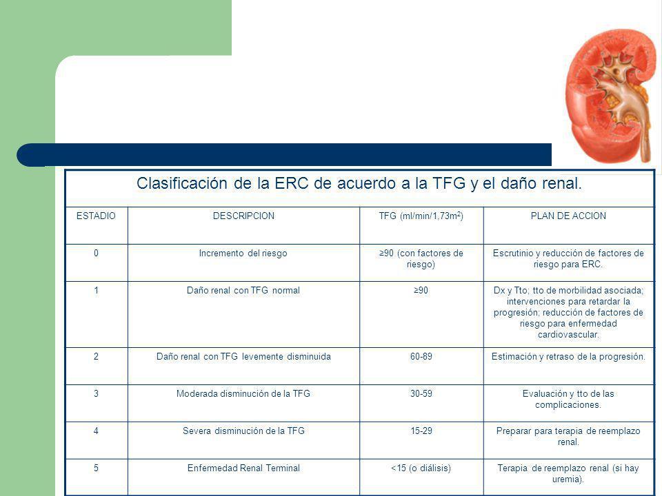 Clasificación de la ERC de acuerdo a la TFG y el daño renal. ESTADIODESCRIPCIONTFG (ml/min/1,73m 2 )PLAN DE ACCION 0Incremento del riesgo90 (con facto