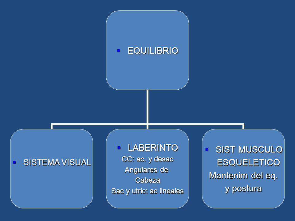 EQUILIBRIOEQUILIBRIO SISTEMA VISUALSISTEMA VISUAL LABERINTOLABERINTO CC: ac. y desac Angulares de Cabeza Sac y utric: ac lineales SIST MUSCULOSIST MUS