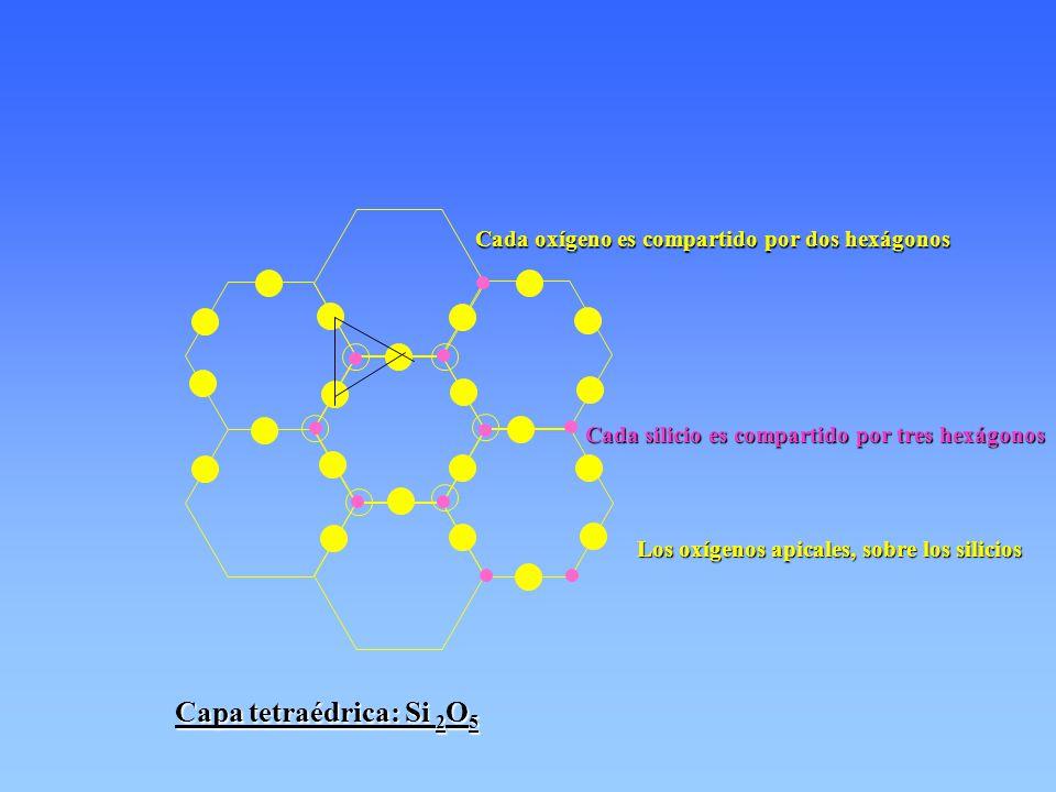 Cada oxígeno es compartido por dos hexágonos Cada silicio es compartido por tres hexágonos Los oxígenos apicales, sobre los silicios Capa tetraédrica: Si 2 O 5