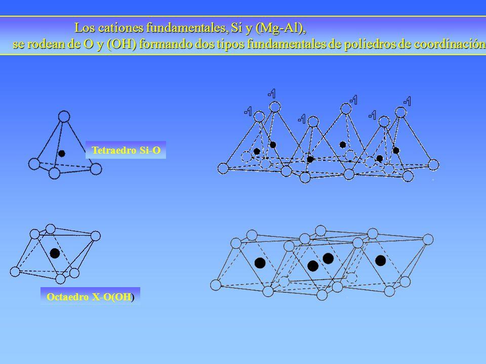 Los cationes fundamentales, Si y (Mg-Al), se rodean de O y (OH) formando dos tipos fundamentales de poliedros de coordinación se rodean de O y (OH) fo